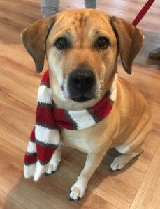 Certified Companion Therapy Dog Kayla